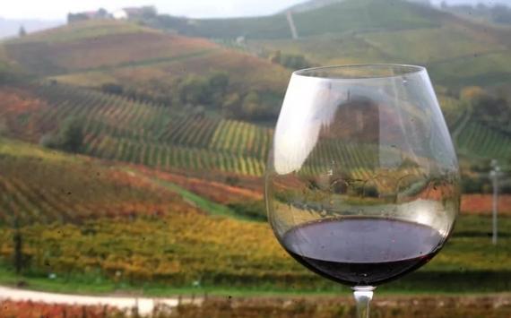 vino vigneto barolo città vino 2021 570