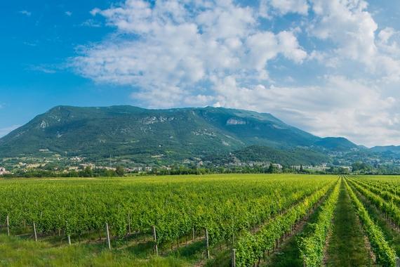 nuova frontiera vini rosati casagrande 3 570