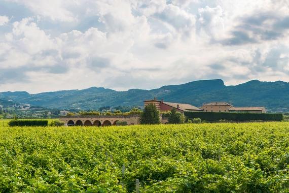 nuova frontiera vini rosati casagrande 4 570
